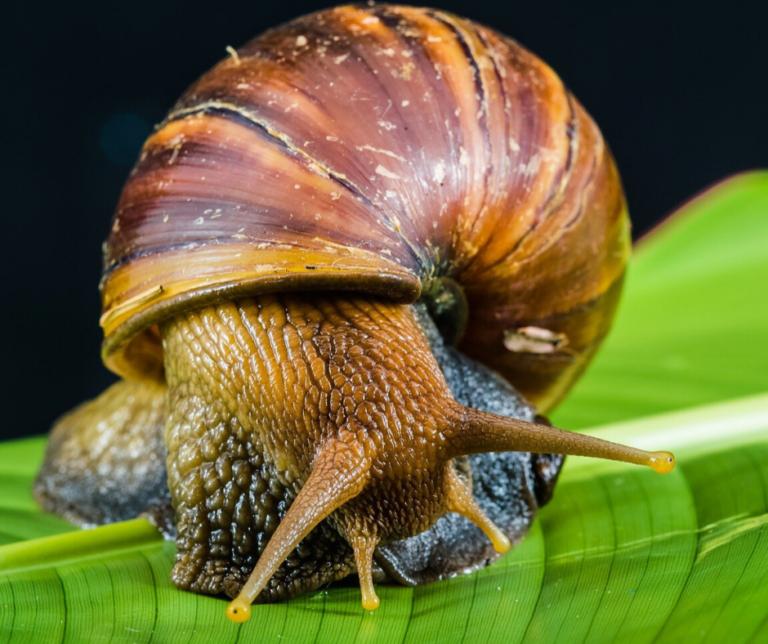 Plaga ślimaków na działce – jak się ich pozbyć?