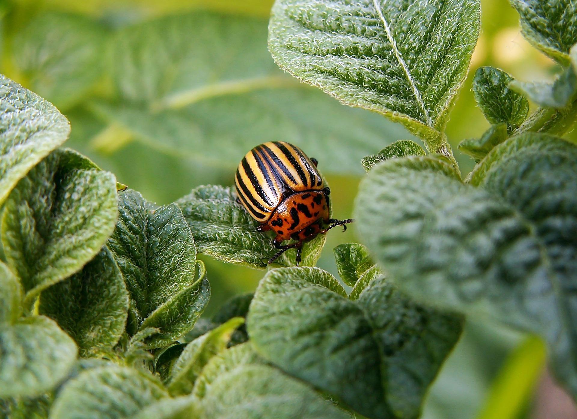 Jakie preparaty zastosować na różne szkodniki roślin?